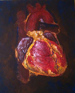 Het hart moet het doen zonder 'eigen' stamcellen