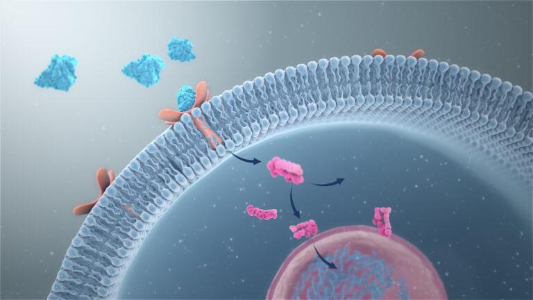 Onze stofwisseling op nano-niveau.